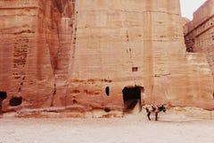 Lonely mule in petra jordan Royalty Free Stock Photo