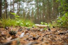 Lonely mushroom Stock Photo