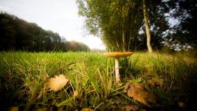 Lonely Mushroom Stock Photos