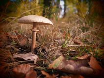 Lonely mushroom in a wild and romantic forrest stock photo