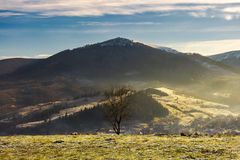 Lonely naked tree on hill in autumn. Hazy morning. distant mountain with snowy top royalty free stock photo