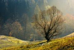 Lonely naked tree on hillside. Lovely autumn scenery on hazy morning Stock Images