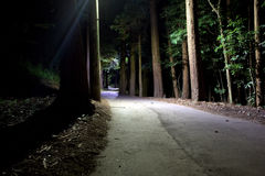 Lonely Night Road. A lonely road winds through a dark Japanese forest at night royalty free stock photos