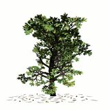 Lonely oak Stock Images
