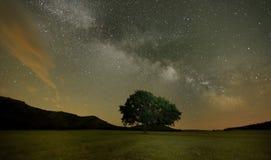 Lonely oak on field under milky way galaxy, Dobrogea, Romania Stock Photo