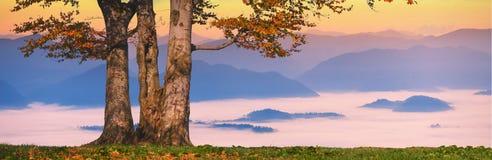 Lonely oak's sunrise Royalty Free Stock Photography