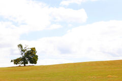 Lonely oak tree Royalty Free Stock Images