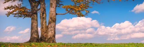 Lonely oak Stock Photos