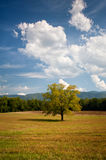 Lonely Oak Tree Landscape In Cades Cove Field. Lonely Oak Tree Landscape In Cades Cove Hay Field during late summer Stock Image