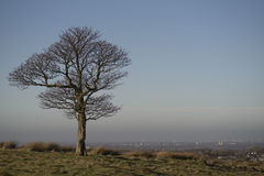 Lonely oak tree in Lyme Park, Stockport Cheshire England winter day. Royalty Free Stock Photos