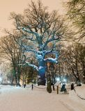 Lonely oak tree at winter night Stock Photo