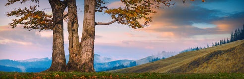 Lonely oak in valley Royalty Free Stock Photography