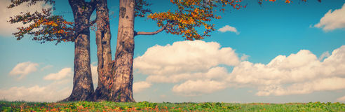 Lonely oak_vintage Stock Images