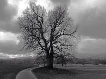 Lonely oak in winter landscape Stock Photography