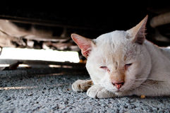Lonely old cat Royalty Free Stock Photography