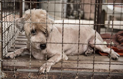 Lonely old dog in cage Stock Photos