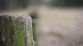 Lonely old piece of wood. Standing in the forest, serves as a fence. He is wearing old-aged moss Royalty Free Stock Image