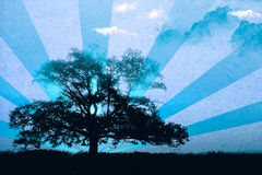 Lonely old tree Stock Images