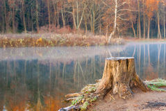 Lonely old tree stump near the lake autumn Royalty Free Stock Photo