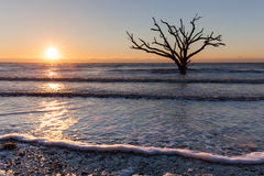 Lonely old tree at sunrise Stock Photography
