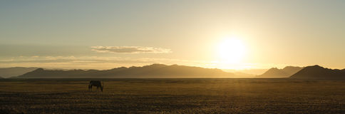 Lonely Oryx in the Desert (Namibia). Lonely Oryx in the Namib Desert (Namibia) on the way to Sossusvlei stock photo