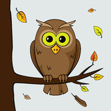 Lonely owl. Sad lonely owl sitting on a branch of a tree fall Stock Photography