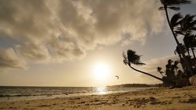Lonely palm hanging on the beach during sunrise on Boracay. Morning kitesurfing swims on the waves. White beach at. Boracay island, Philiphines stock footage