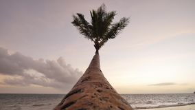 Lonely palm hanging on the beach during sunrise on Boracay. White beach at Boracay island, Philiphines. Lonely palm hanging on the beach during sunrise on stock footage
