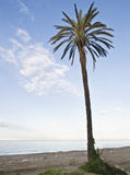 Lonely Palm Tree. Lone palm tree in the sand on a beach at sunset Stock Photo