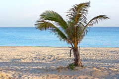 A lonely palm tree in a  beach. A  palm tree in a deserted beach in the morning Stock Photo