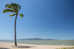 Lonely palm tree on a beach in Queensland, Australia Stock Photography
