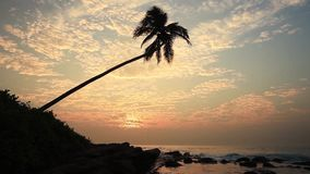 Lonely palm tree on the beach at sunset. Sky background stock footage