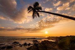 Lonely palm tree on the beach at sunset. Sky background Royalty Free Stock Photo