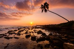Lonely palm tree on the beach at sunset. Sky background Stock Photos