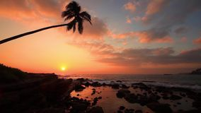Lonely palm tree on the beach at sunset. Sky background stock video footage