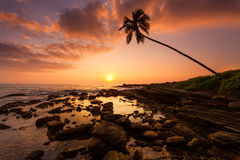 Lonely palm tree on the beach at sunset Royalty Free Stock Images