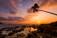Lonely palm tree on the beach at sunset Stock Image