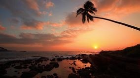 Lonely palm tree on the beach at sunset stock video footage
