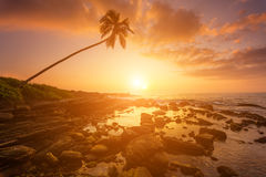 Lonely palm tree on the beach at sunset Royalty Free Stock Photos
