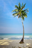 Lonely palm tree Royalty Free Stock Image