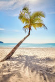 Lonely palm tree on a beautiful tropical beach at warm sunset li Stock Images
