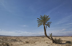 Lonely palm Stock Photography