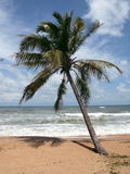 Lonely palm tree, island Phu Quoc, Vietnam 1 Royalty Free Stock Image