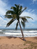 Lonely palm tree, island Phu Quoc, Vietnam 2 Stock Photo
