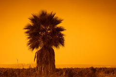 Lonely palm tree Royalty Free Stock Photos