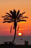 Lonely palm tree in the light of the sunset sea. Royalty Free Stock Photography