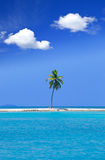 Lonely palm tree in the middle of ocean on backgro Royalty Free Stock Images