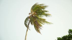 Lonely palm tree moving in wind against bright sky stock video footage