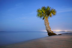 Lonely Palm Tree. A lonely palm tree resting on a beach in Fort Walton Beach, Florida royalty free stock photography