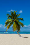 Lonely palm tree on a sandy beach. Amazing view, Caribbean Islands stock photography